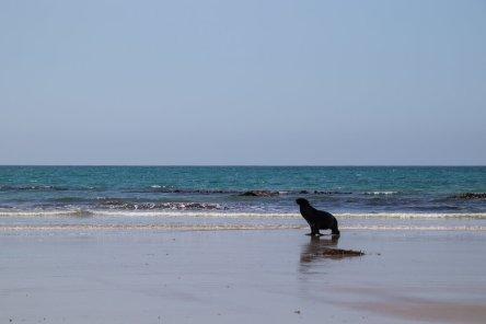 A friendly fur seal