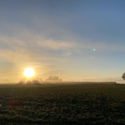 2 Foggy morning run